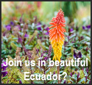Join Us in Ecuador! Click here for more information!